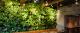 Murs Végétaux - Gamme Eclipse