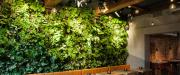 Murs végétaux - Gamme Prestige discount