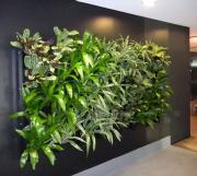 Murs végétaux - Gamme Eclipse discount