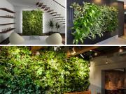 Pack 3 murs végétaux (offre limitée) discount
